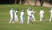 cricket-celebration