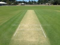 green-cricket-pitch